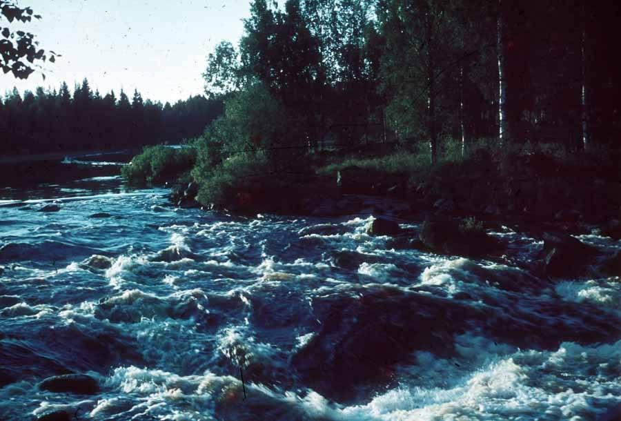 06_Hietaman_niska_38_ENorell