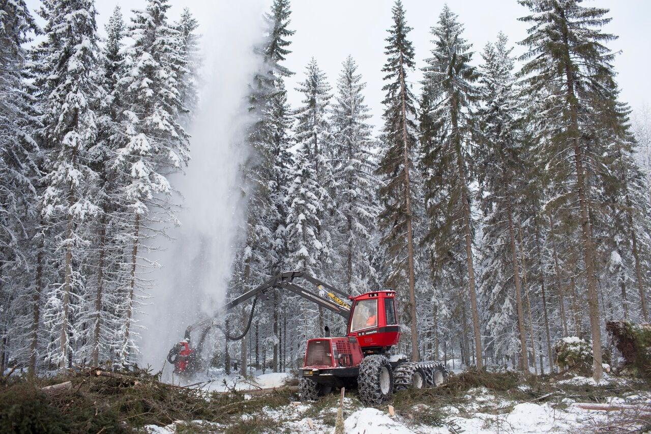 Metsapalvelu_Hiekkala_001